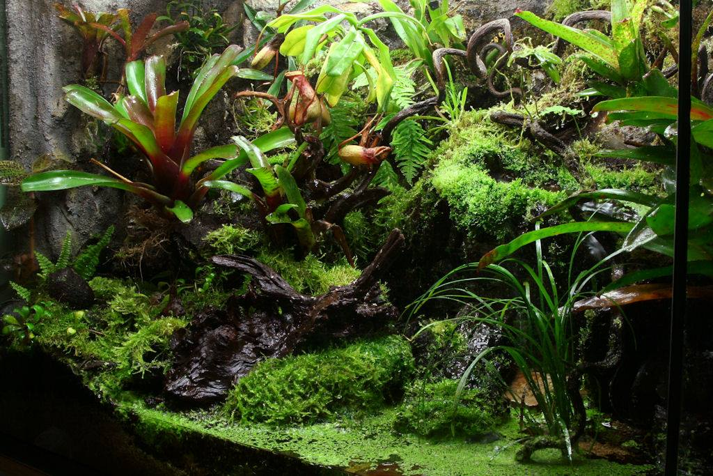 Build A Rainforest Terrarium Arcamazon Alliance For Research And