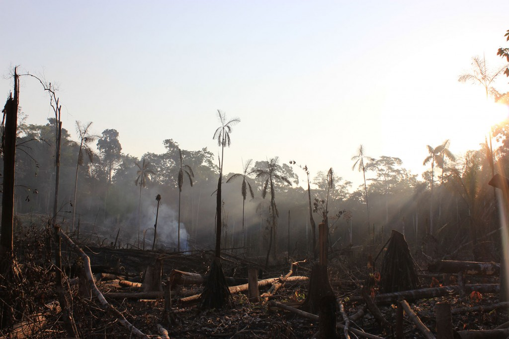 Las Piedras Amazon deforestation in Lucerna unsustainable agriculture