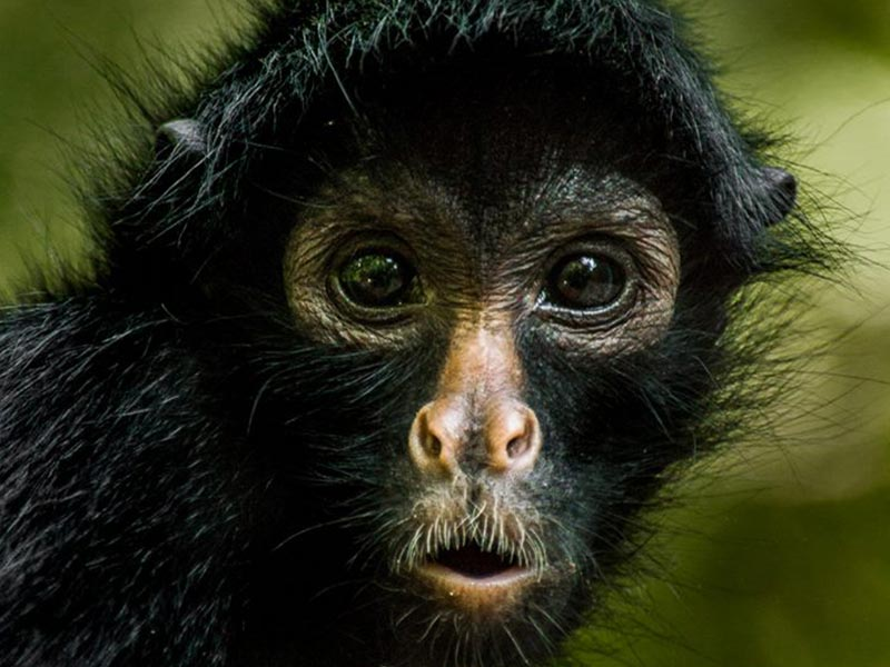 PRIMATE CONSERVATION RESEARCH