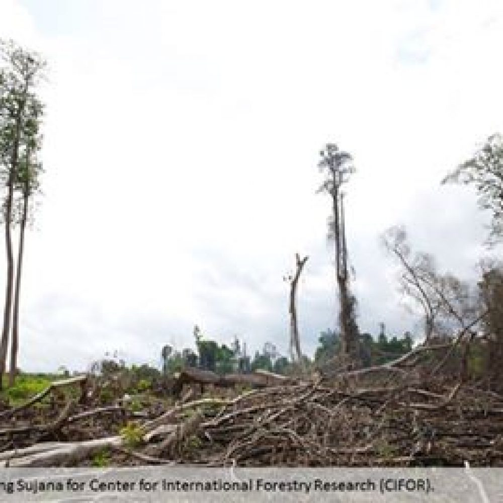 Unsustainable Agriculture Biggest Threat to Rainforests