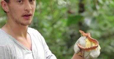 The Amazon Boas (ARCtv S01 Ep 02)