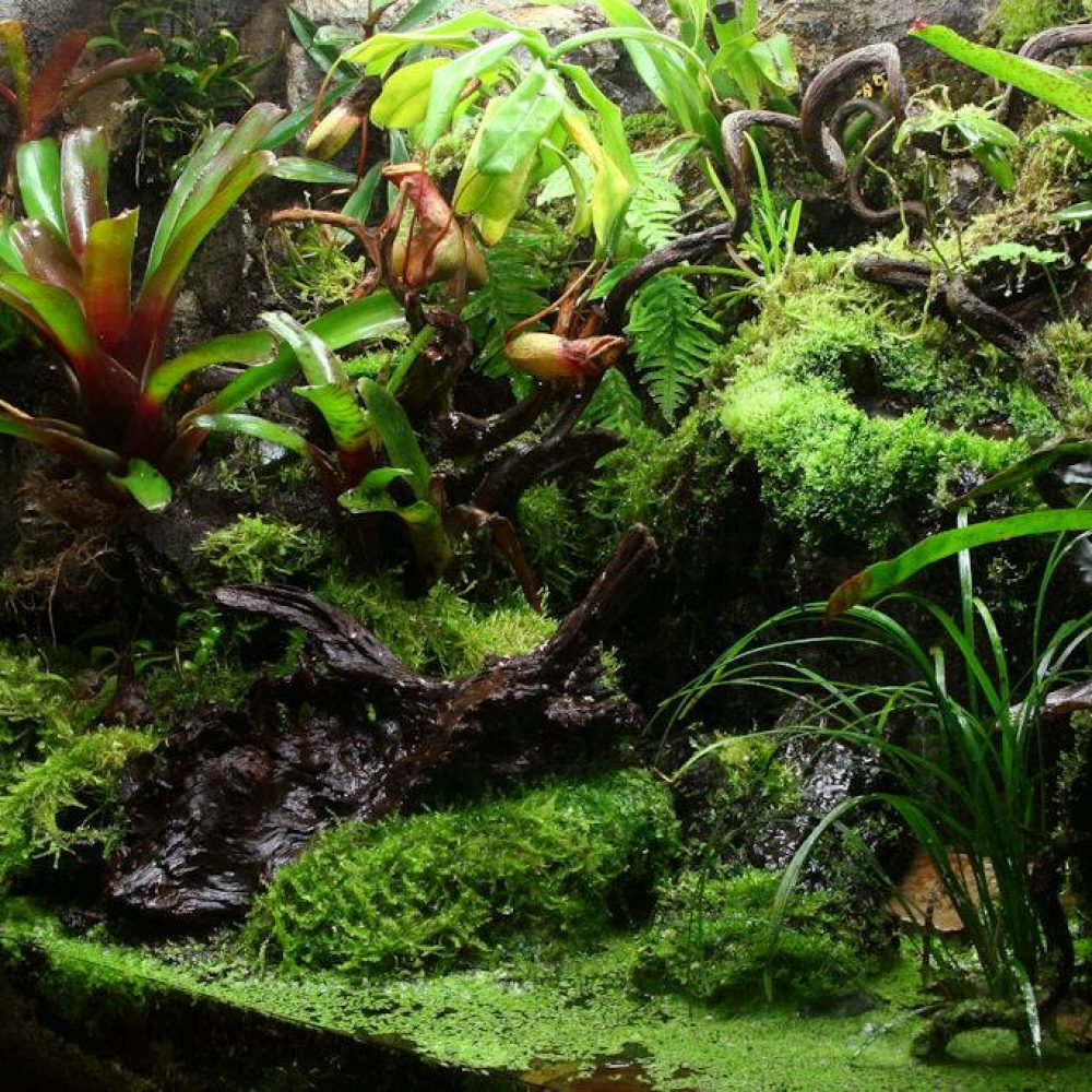 Build a Rainforest Terrarium