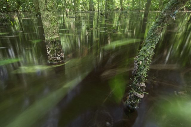 Flooded Forest by Tom Ambrose