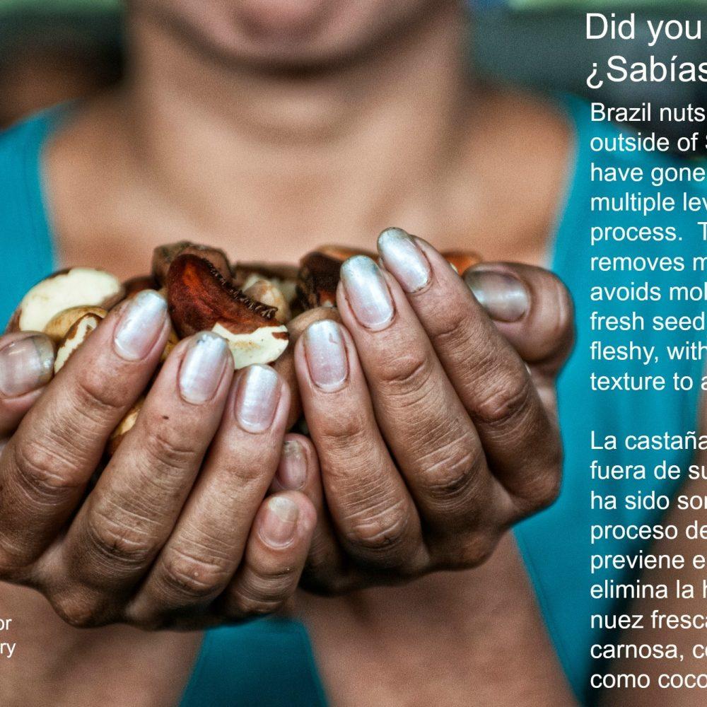 Brazil Nuts – La Castana