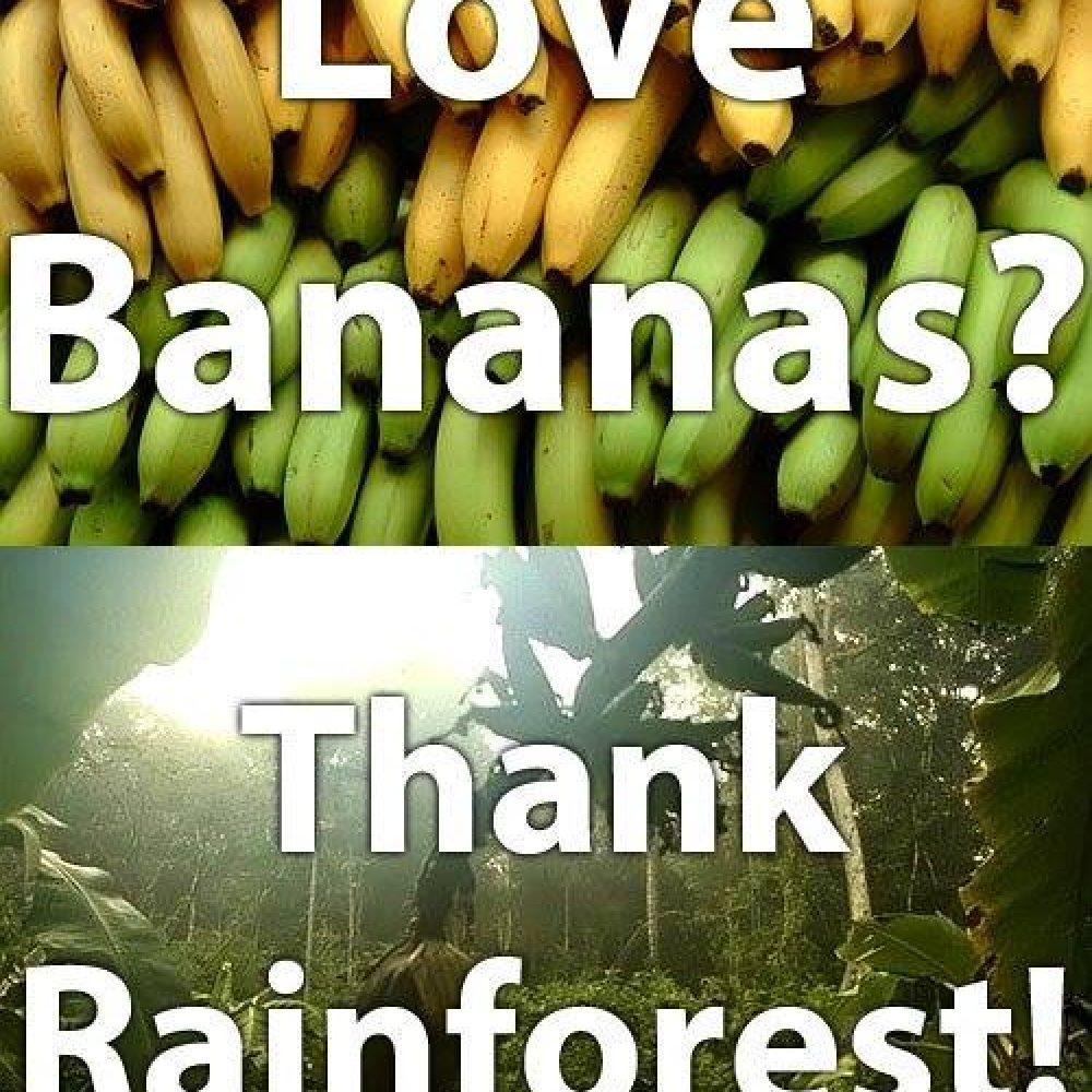 Origin of Bananas